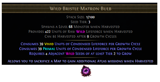 Wild Bristle Matron Bulb